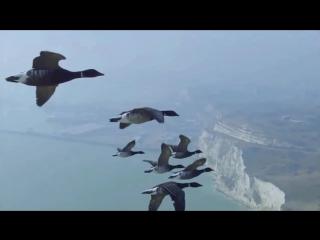 Весенняя охота на гуся 2018 - УЖЕ НАЧАЛАСЬ. Они МАССОВО ЛЕТЯТ к нам. В конце взрыв мозга