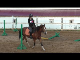 тренировка в КСК Покров змейка на Ассоль