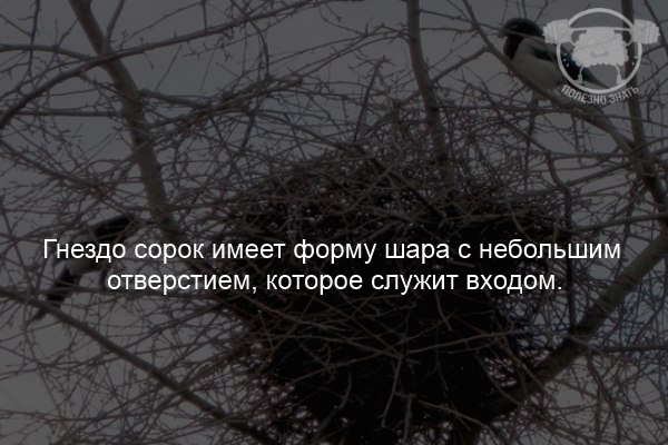 https://pp.userapi.com/c840438/v840438074/1b54f/bqA8ucLpglo.jpg