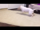 Очень весёлая собачка Гера