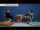 Хаски Флора TiTBiT Собаки в нашей жизни Интервью 2 Вельш корги пемброк
