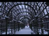 Зимняя прогулка по Летнему саду.