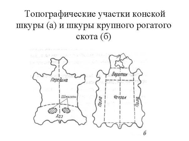 Начинающему кожевеннику на заметку:Строение и топография шкуры Чепра