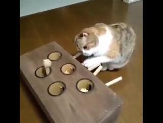 занять кота на весь день