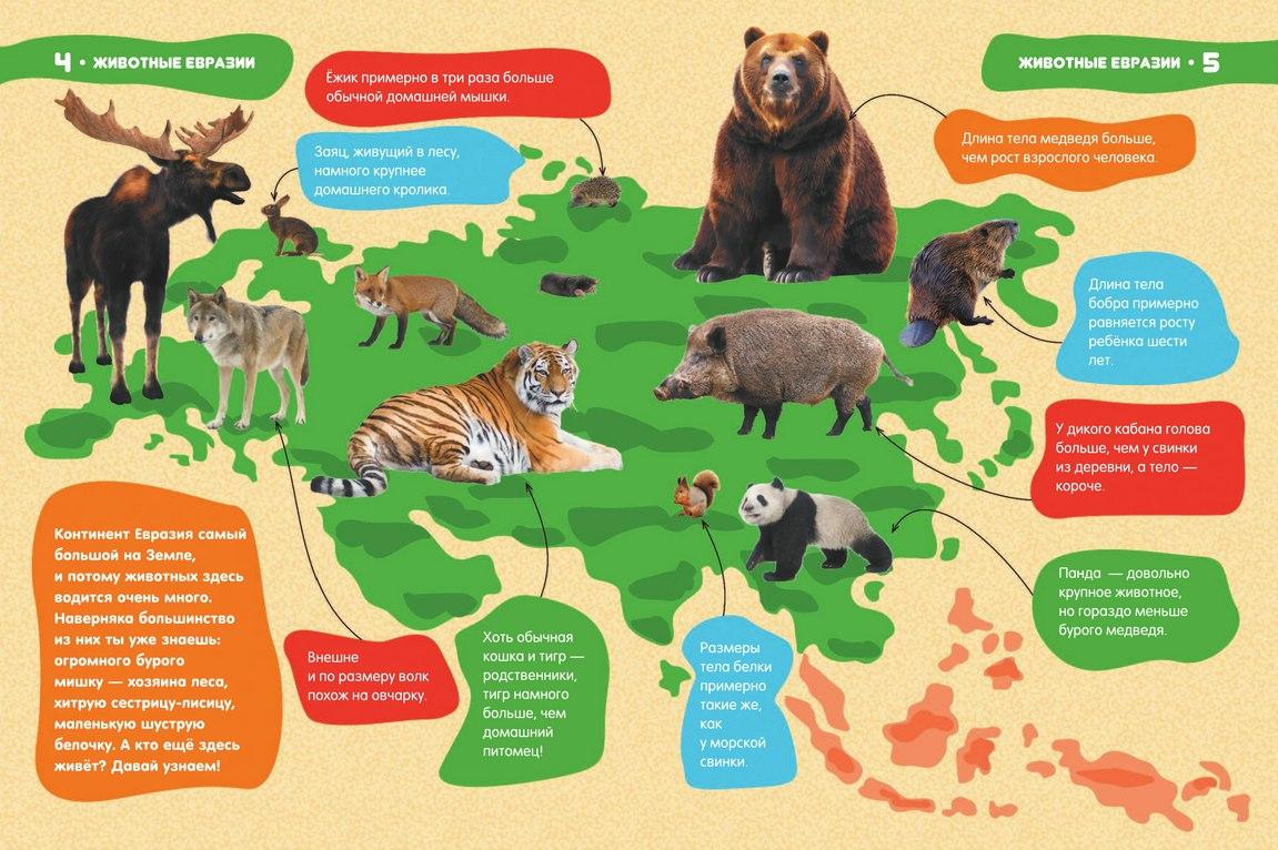 Животный мир картинки евразии, годовщина свадьбы открытка
