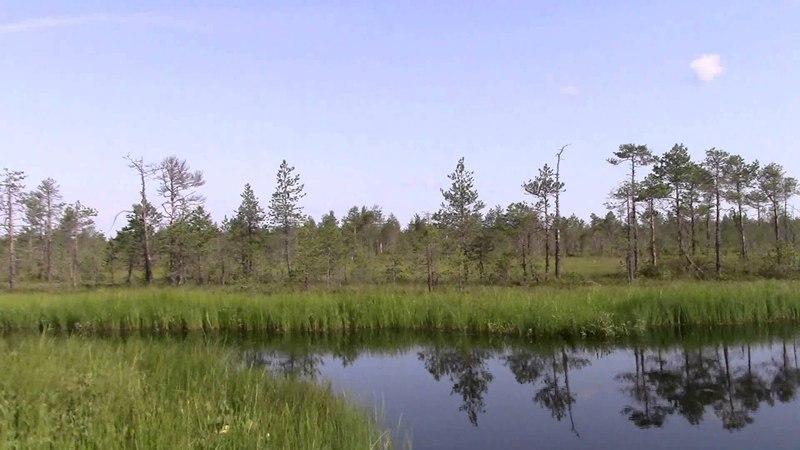 В поисках неизвестных озер. Незаконченный поход. Вологодские болота.