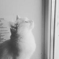 OLIVIA#1