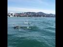 Дельфины устроили шоу в Сочи