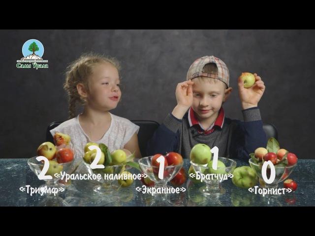Как дети пробовали садовые яблоки. Питомник «Сады Урала»