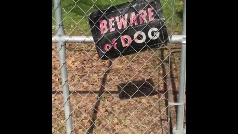 Terrifying dog! 