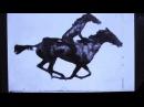 Horse Riding Horse....nevermind... · #coub, #коуб
