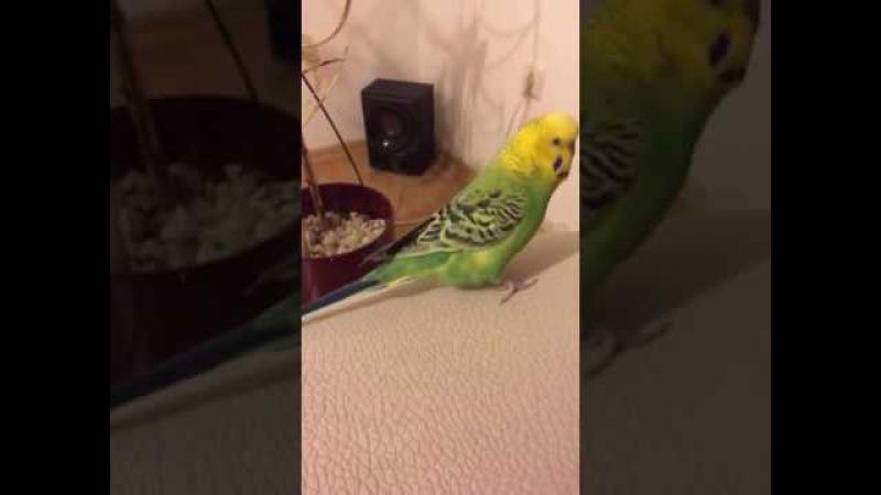 Sahibine S*kerim Bak diyen Muhabbet kuşu