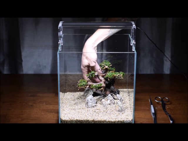Запуск и оформление нано-аквариума с деревом в стиле минимализм