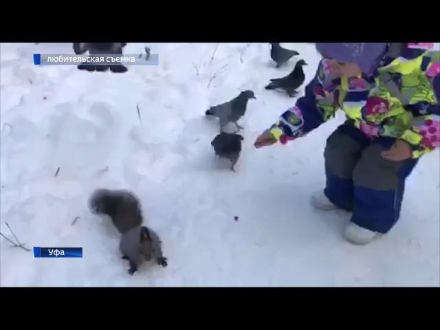 В уфимском парке голуби напали на белку