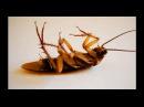Единственное эффектное средство против тараканов