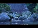 Forest Stream Nature Sound 4K Ultra HD Footage 白谷雲水峡/屋久島