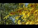 Александровский сад осень рябина