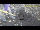 Посадка малины Летней и ремонтантной весной и осенью