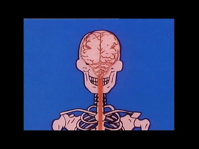 Byl Sobie... Zycie - Epizod 19 - Szkielet (Wyciąg)