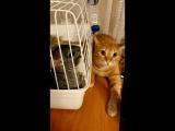 Готовят побег#кот#шиншилла