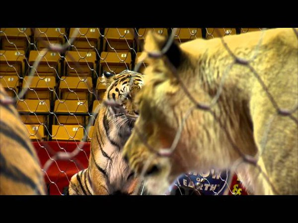 Big Cats Jumping - Alexander Lacey Big Cat Training Session