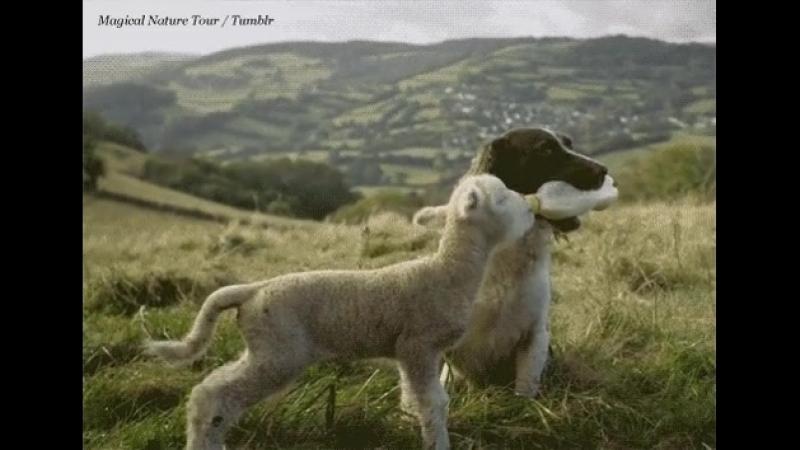 я тебе и пастух и кормящий отец