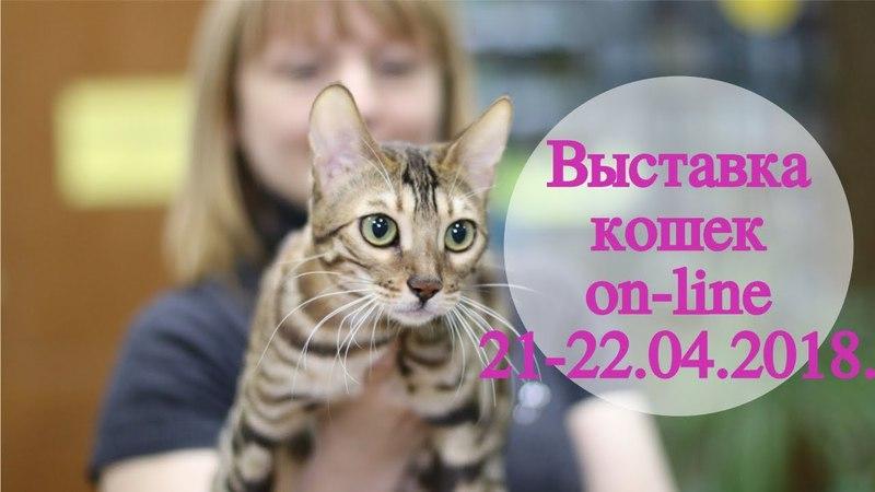 Анонс выставки кошек PCA on-line 21-22.04.2018г.