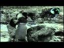 Thambraan Thoduthathu Malarambu Malayalam Filim Song Video