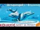 Шоу Черноморских дельфинов во Владимере 2018