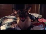 Смешные коты, кошки (март 2018) _ Funny Pet Videos