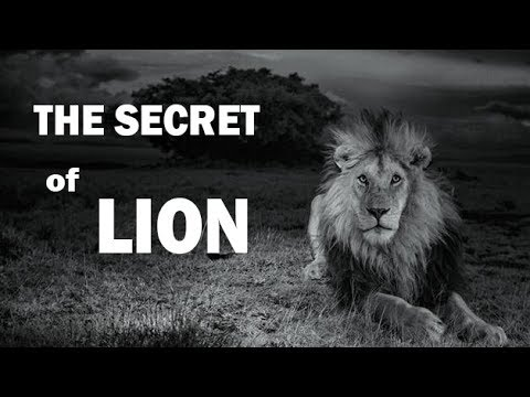 National Geographic Lion Animal Planet Documentary Documentary