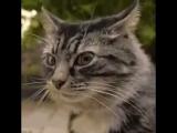 #кот #джентельменыудачи #леонов