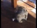 Ещё один кот из семейства жидких