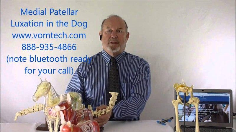 Медиальный вывих коленной чашечки у собак (мануальная, миофасциальная и лазеротерапия) / Medial Patellar Luxation in the Dog