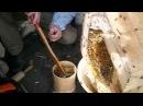 Медовый корпус колоды. Сотовый мед.