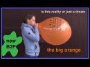 Uta pustet einen riesigen orangen Luftballon bis zum Ende auf - B2P - Nik Bone Video