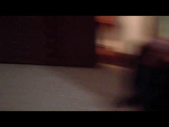 Talking Kitty Cat 29 - Kitten Sitting · coub, коуб