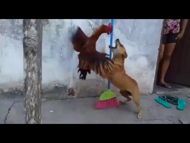 Chique Liro vs Scubi Du com musiquinha do Paulista no fundo