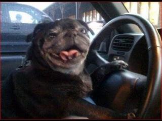 Собака умнее человека. Снежинск 3 ноября 2017