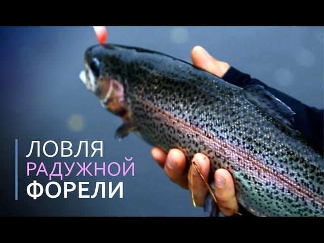 Ловля радужной форели. Рыбалка с проектом Получи леща! на блесна AKKOI Reflex
