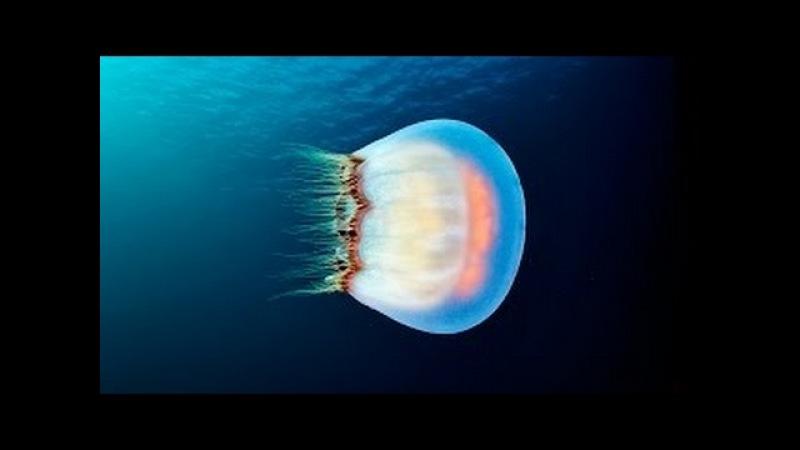 Морские глубины Египта Подводный мир Документальные фильмы красное море 2016