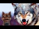 Наука для детей Животные Волки Мир животных Хищники