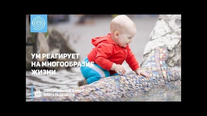 Ум реагирует на многообразие жизни Олег Гадецкий