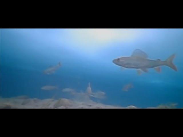 РАЙ ДЛЯ РЫБАЛКИ | Зимняя рыбалка на реке Каа-Хем, Тыва | Рыбалка на хариуса в Сибири