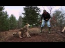 Wolf Release 4
