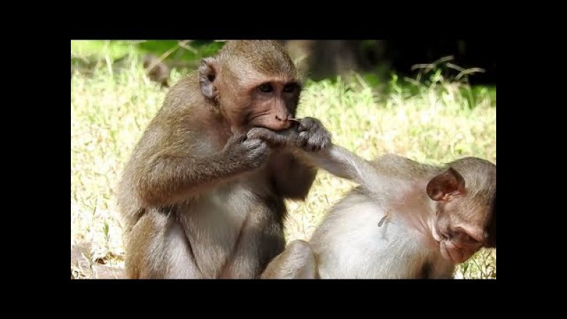 Just play don't bite me, Cute poor baby monkeys