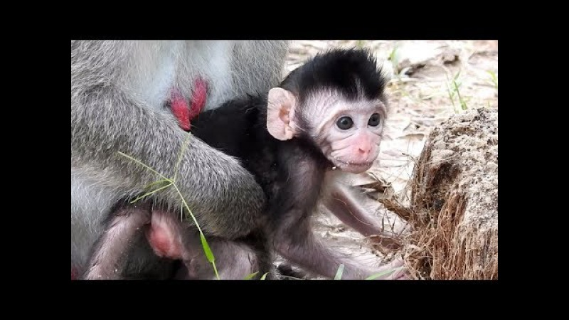 Very cute and lovely baby monkey newborn