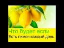 Что будет если есть лимон каждый день