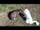 Кот матершинник
