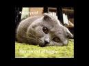 Смешные кошки Приколы КОТ 0079